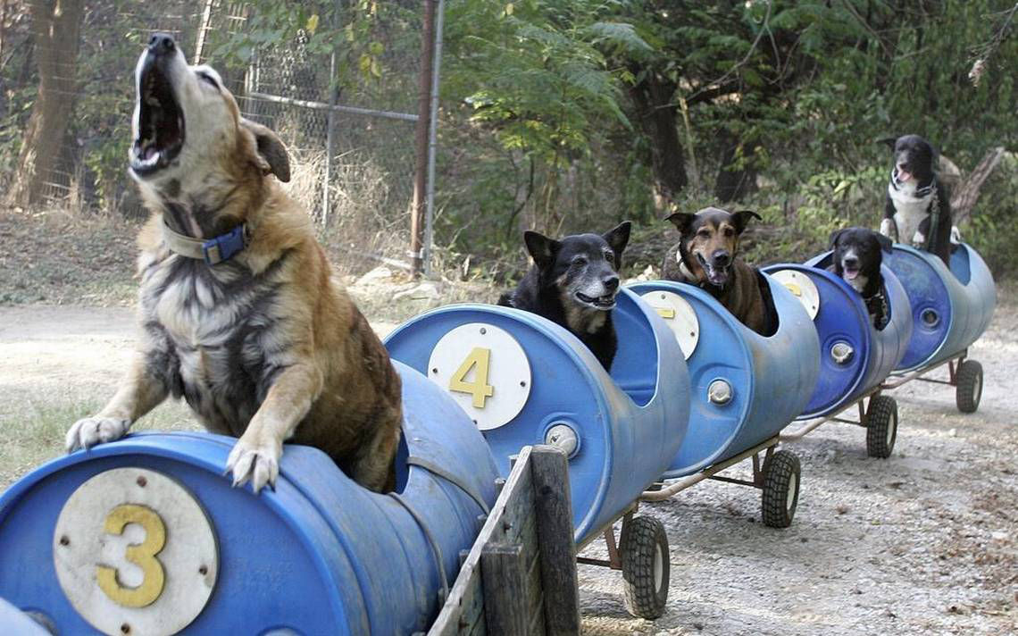 Doggy Train Image 2